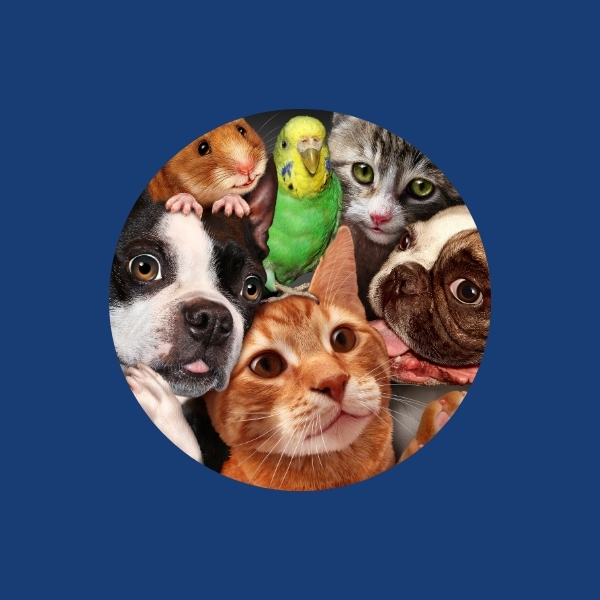 Image - Pet insurance choices with pets