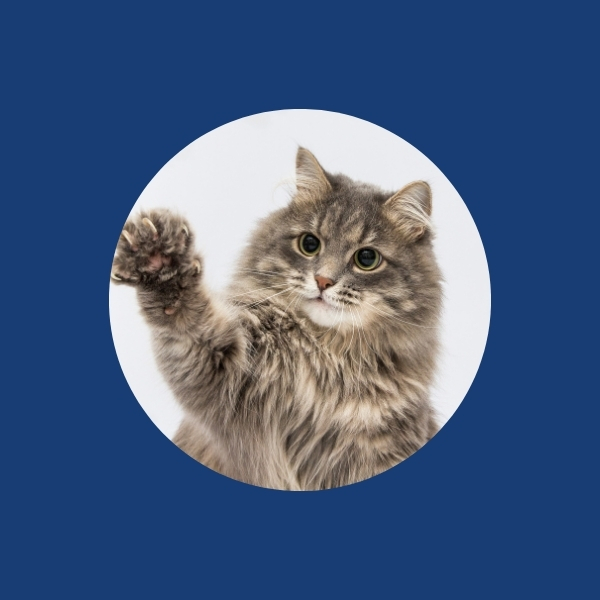 Image - Pet insurance Discounts with cat