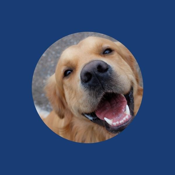 Image - Dog insurance